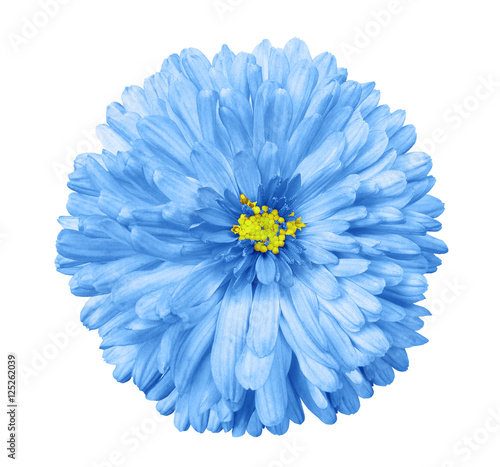 Blue flower white isolated background with clipping path closeup flower white isolated background with clipping path closeup no shadows mightylinksfo