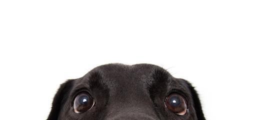 FototapetaFunny dog