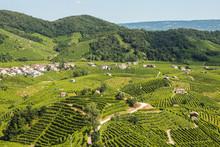 Prosecco Wineyards In Valdobbiadene Town