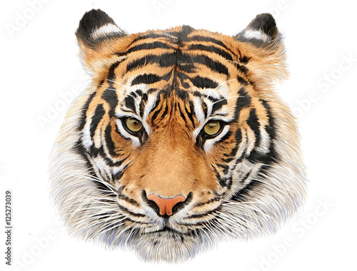 Tiger head hand draw and paint color on white background illustration. Wall mural