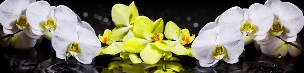 Fototapeta Wieloczęściowe Орхидеи