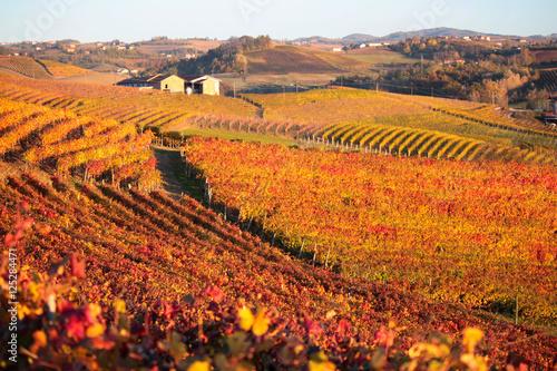 Tuinposter Oranje eclat panorama agricolo di vigneti in piemonte