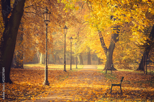 Foto op Plexiglas Oranje Colorful tree alley with row of lanterns in the autumn park on a sunny day in Krakow, Poland