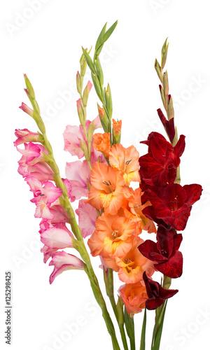 bouquet of gladiolus