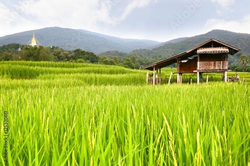 Foto auf Gartenposter Reisfelder rice terrace at chiangmai , thailand