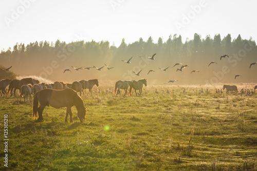 Printed kitchen splashbacks Horses Konikpaarden Oosvaardeseplassen