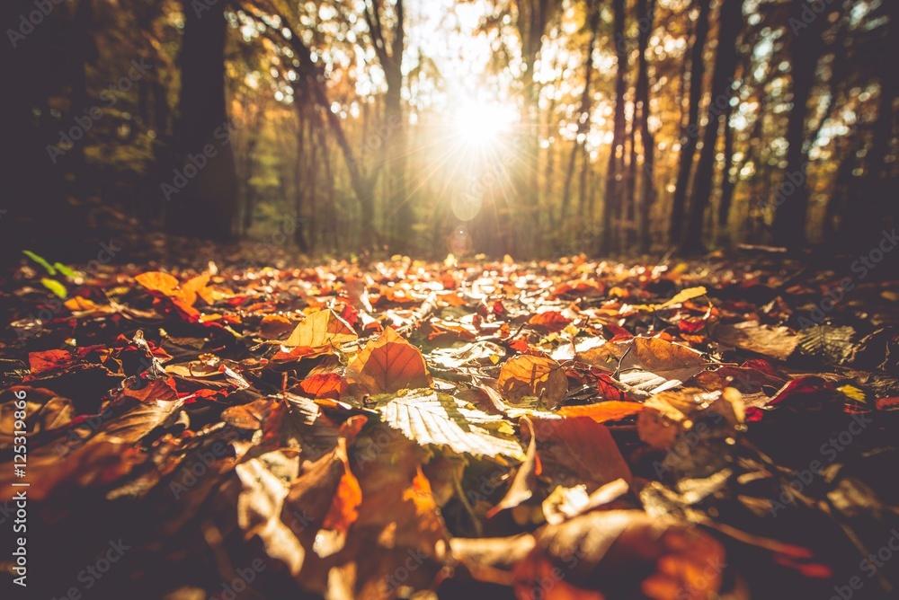 Fototapeta Golden Autumn Foliage - obraz na płótnie