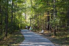 Walking Trail Through A Forest