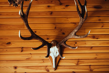 Deer Antler On Old Brown Wooden Wall