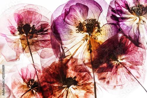 dry poppy flowers - 125336809