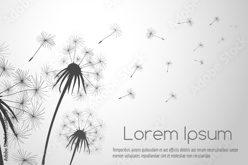 Valokuvatapetti Wind blowing dandelions seeds for cards decor vector illustration
