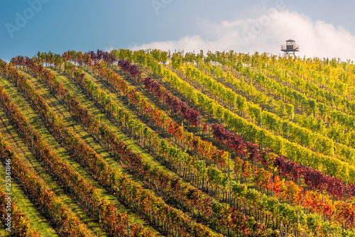 Panorama of colorful vineyard with lookout, Palava, Mikulov region, South Moravia, Czech Republic