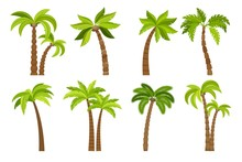 Palm Trees Isolated On White B...