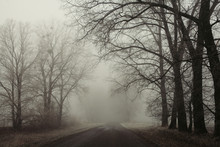 Foggy Road And Trees. Mysterio...