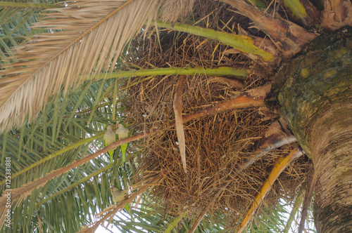 Poster Roe Three green parrot sitting on branches of palm trees, view from below