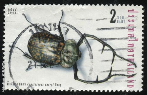 Fotografia  beetle