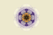 Purple And Yellow Symmetrical Flower