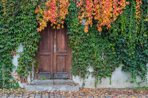 Foto op Plexiglas Trappen Old wooden door overgrown with ivy in fall colors