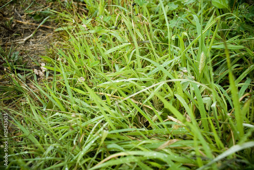 Wet Grass after the rain