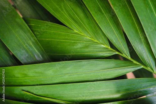 zblizenie-na-lisc-palmowy