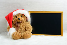 Teddy Bear Next To The Picture In The Frame