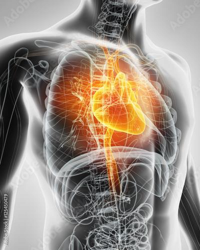 podswietlone-serce-czlowieka-3d