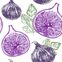 Fig Fruit Hand Draw Sketch Background Pattern. Vector