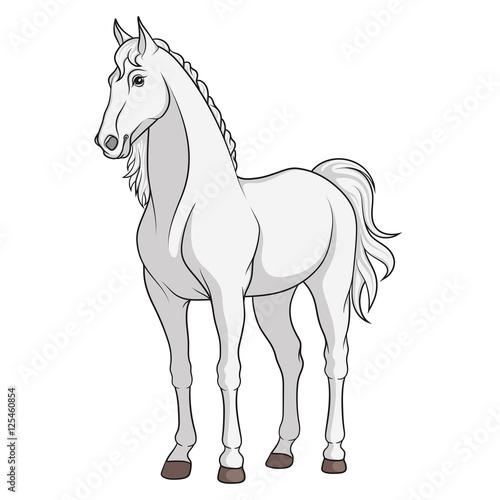Garden Poster Pony Color vector image of a white horse.