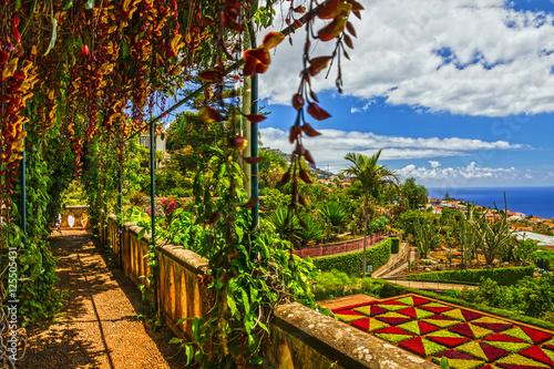 Fotografie, Obraz  Madeira island, Botanical Garden Monte, Funchal, Portugal