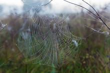 Spider Web Close-up
