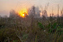 The Web Of A Spider