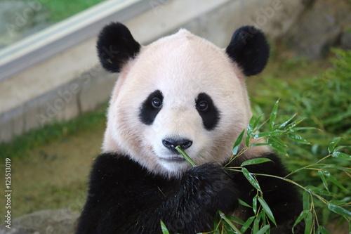 Deurstickers Panda パンダ