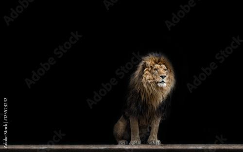 Foto op Plexiglas Leeuw Portrait of a Beautiful lion, in the dark