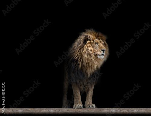 Staande foto Leeuw Portrait of a Beautiful lion, in the dark