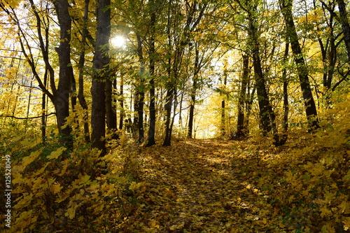 Foto op Canvas Herfst Bright autumn beautiful forest