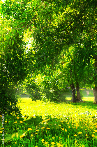 Staande foto Lente summer blossoming green trees and park