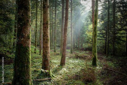 un rayon de lumière dans un sous bois
