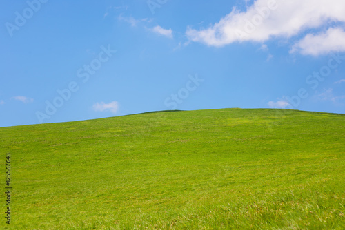 Poster Heuvel idyllic landscape of green heels, blue sky in Carpathian mountains
