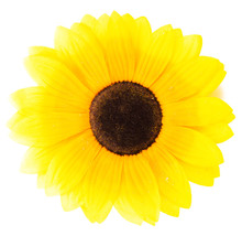 Artificial Sunflower, White Ba...