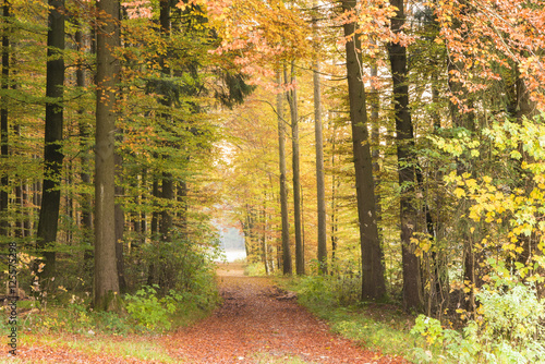 Foto  Way to forest in autumn