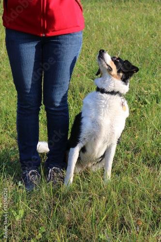 "Fotografía  Dog Training, command ""sit"", Dog is waiting for a treat, Hundetraining, Kommando"