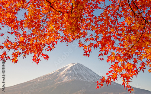 Mount Fuji with beautiful color red maple ( Momiji) at lake Kawaguchiko, Japan.