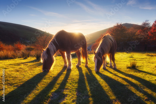 Photo horses in the mountain