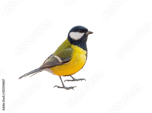 Spoed Foto op Canvas Vogel Tit bird isolated on white background