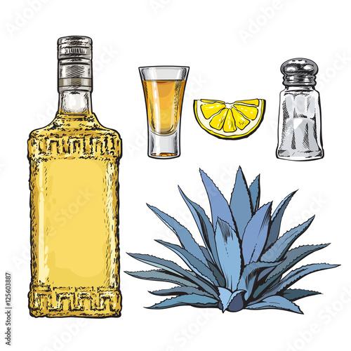 Satz Tequilaflasche, Schuss, Salzmühle, Agave und Scheibe des Kalkes, Skizzenvektorillustration lokalisiert auf weißem Hintergrund Fototapete