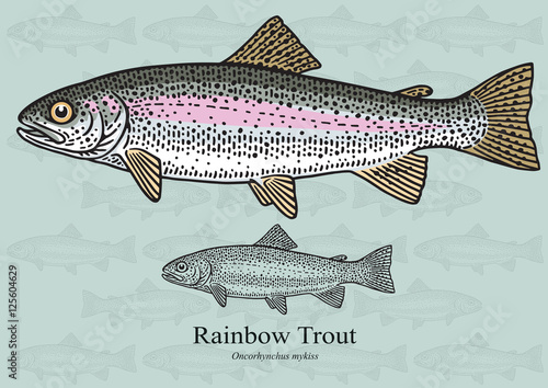 Photo Rainbow Trout