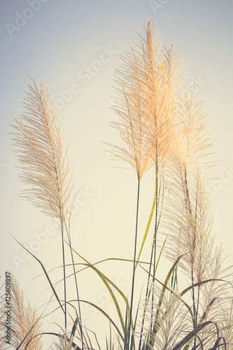 Fotografia Vintage Reed