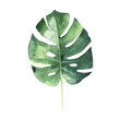 canvas print picture - Tropical Hawaii leaves palm tree in a watercolor style isolated.