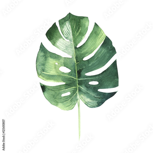 Obraz Tropical Hawaii leaves palm tree in a watercolor style isolated. - fototapety do salonu