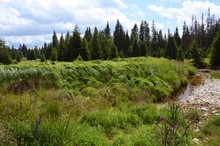 Roklansky Creek National Park Sumava, Czech Republic